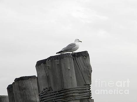 Seagull in New York by Kristy Evans