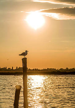 Eduardo Huelin - Seagull in sunset in Venice Italy