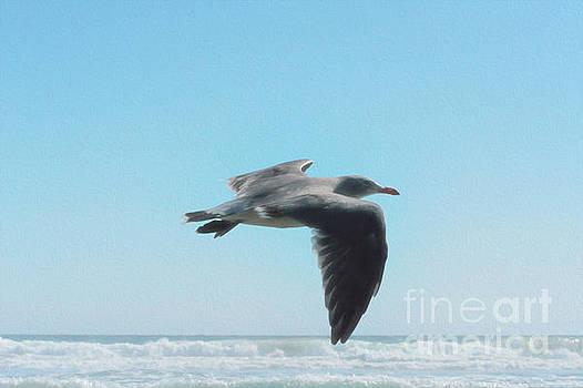 Seagull by Leah McPhail