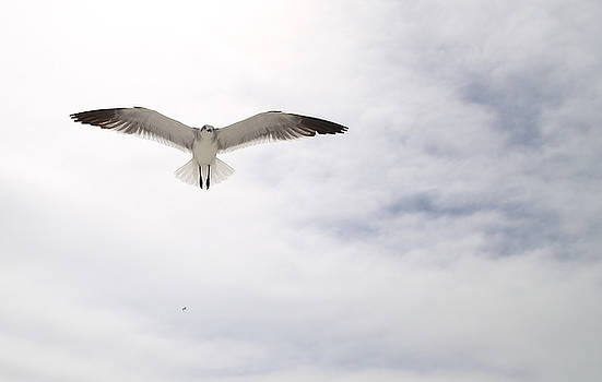 Seagull Looking Down from Above by Jim Clark
