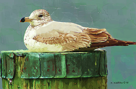 Seagull by Margie Middleton