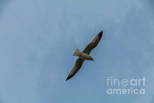 Seagull by Mim White