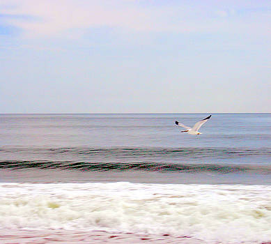 Seagull Morning 2 by Ryan Abboud
