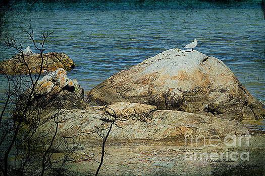 Seagull on a Rock by Elaine Teague