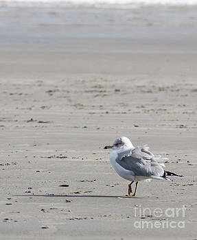 Erin Thomas - Seagull on Beach