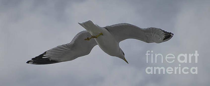 Seagull on Emerald Island by Debbie Morris