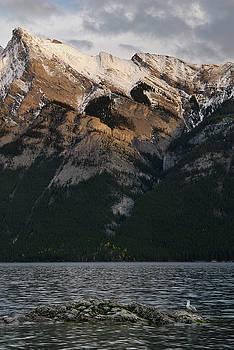 Reimar Gaertner - Seagull on rock in Lake Minnewanka in the Canadian Rocky Mountai