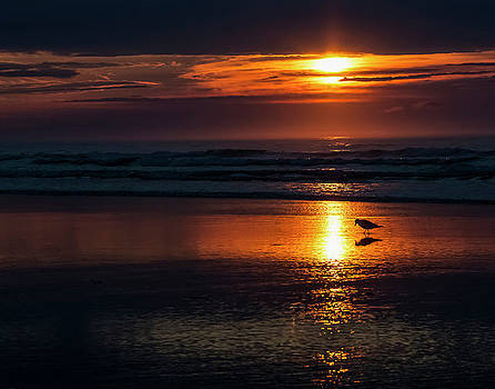 Seagull on the Beach at Sunrise by Susan Schmidt