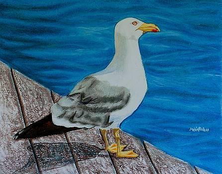 Seagull on the shore - Gaviota en la costa by Melvin Rodriguez