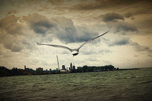 Seagull Over Lake Erie by Laurence Nozik