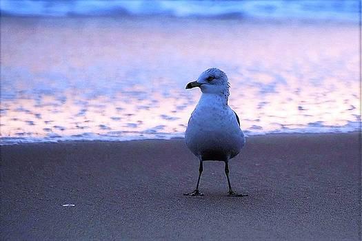 Seagull Posing by Kim Bemis