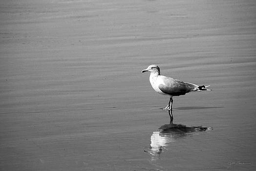Julie Magers Soulen - Seagull Reflection