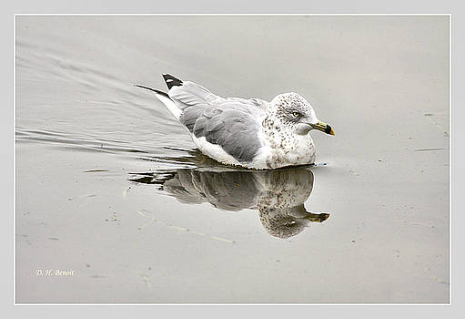 Deborah Benoit - Seagull Reflections