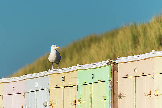 Seagull resting on beach sheds in sunset by Maximilian Wollrab
