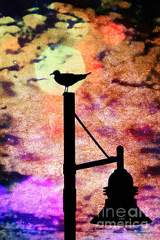 Seagull Silhouette 4 by Kelly Nowak