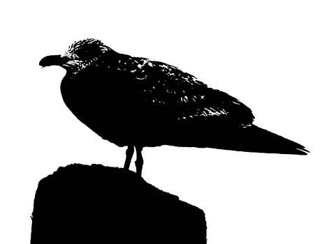 Seagull Silhouette by Joey OConnor