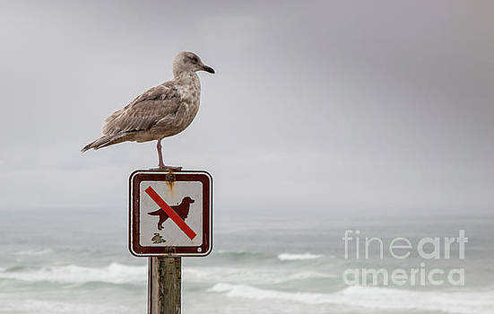 Seagull standing on sign and looking at the ocean by PorqueNo Studios
