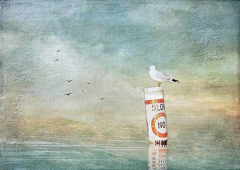 Seagull by Stephanie Calhoun