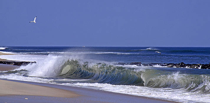 Seagull Wave by Kelly S Andrews