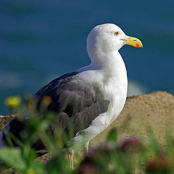 Seagull with Flowers by Richard Hinds