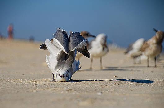 Seagull Yoga by Beth Sawickie