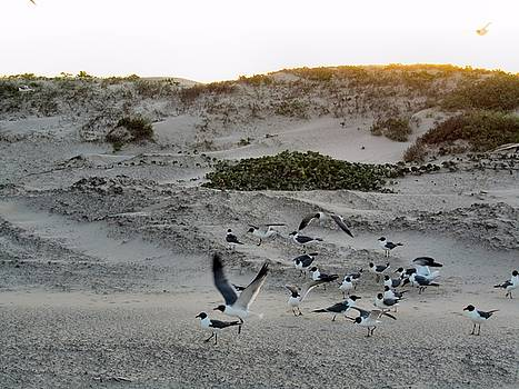 Seagulls 2 by Camera Candy