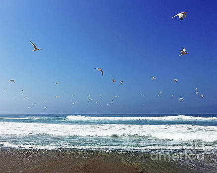 Seagulls and Wave by Cheryl Del Toro