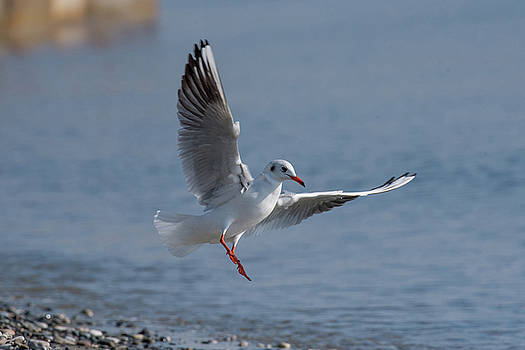 Seagulls are flying in sky over the sea by Julian Popov