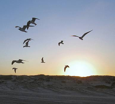 Seagulls as Sunset by Camera Candy