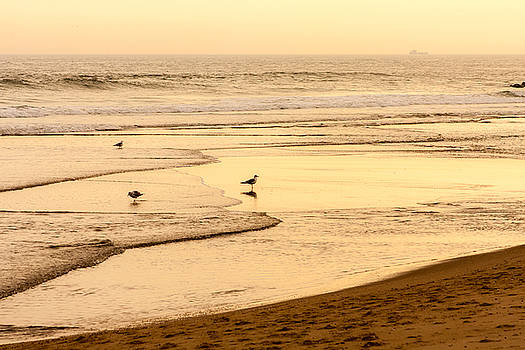 Seagulls at the Shore by Kathleen McGinley