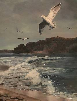 Seagulls by Betsy Cullen