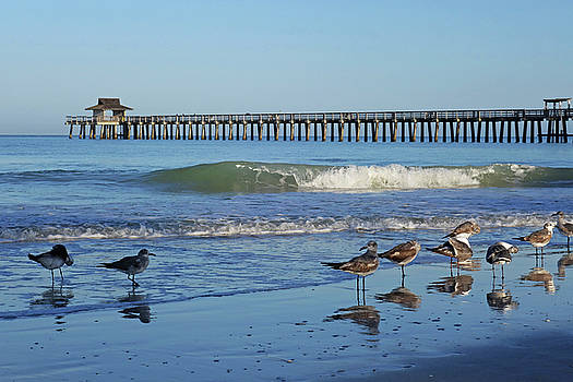 Toby McGuire - Seagulls Congregating By the Naples Pier Naples Florida