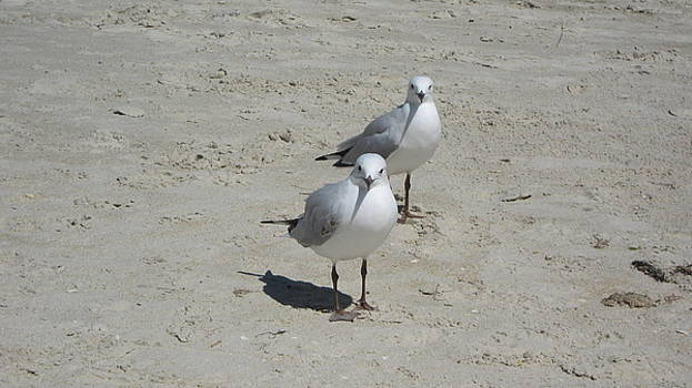 Seagulls by Emma Frost