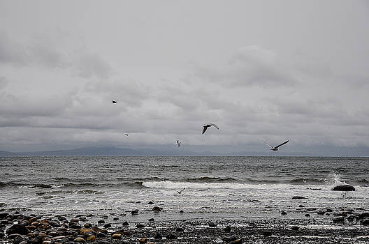 Seagulls Flight Path by Roxy Hurtubise
