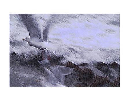 Seagulls In Motion by Klaus Bohn