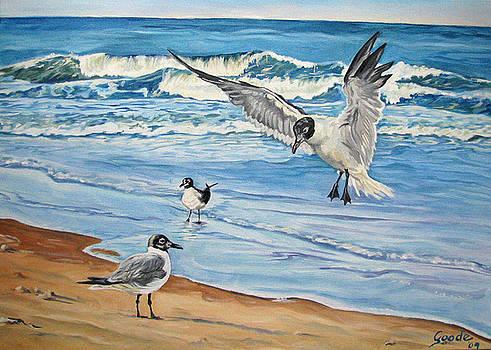 Seagulls by Jana Goode