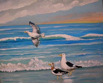 Seagulls by Jean Pierre Bergoeing
