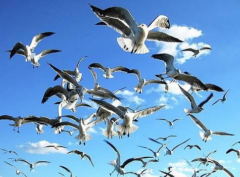 Seagulls by Kyle Ferguson