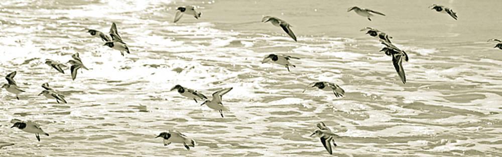 Seagulls Landing Tampa Florida by Kristen Vota