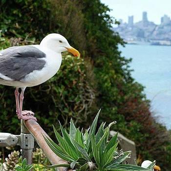 Seagulls Love #alcatraz #sanfrancisco by Patricia And Craig