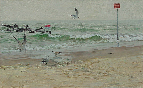 Seagulls on a Shore by Sergey Zhiboedov
