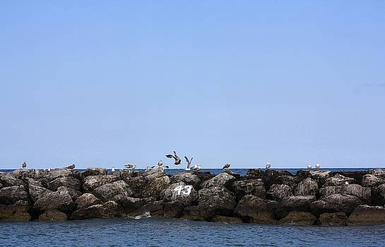 Seagulls On Forty Three  by Gothicrow Images