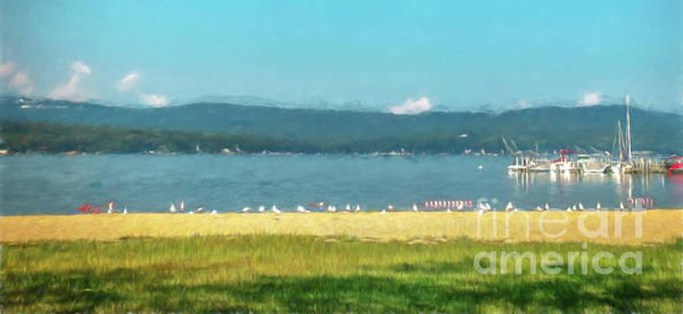 Seagulls on Lake Winnisquam by Mim White