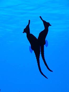 Seahorse Duet by Erin Villareal