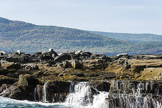 Seal Island by Anthony Baatz