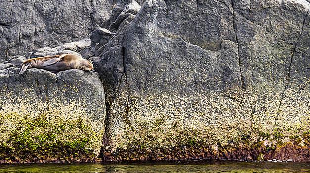 Steven Ralser - seal - Montague Island - Australia