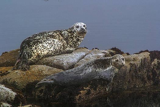 Seal of Lover's point Beach by Atul Daimari