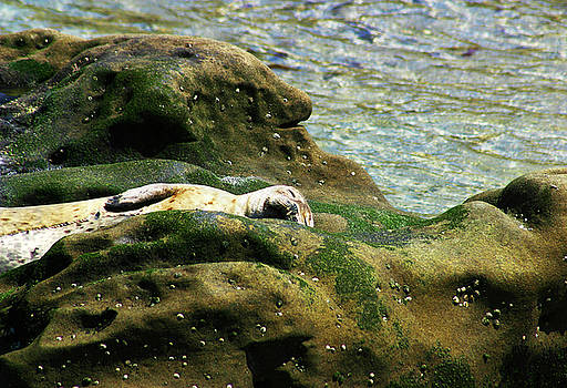 Seal on the Rocks by Anthony Jones