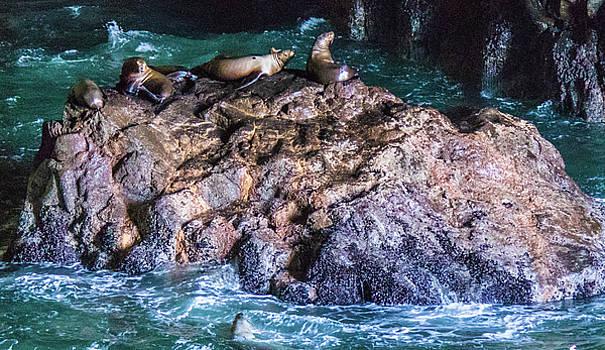 Seal  Rock by Jonny D