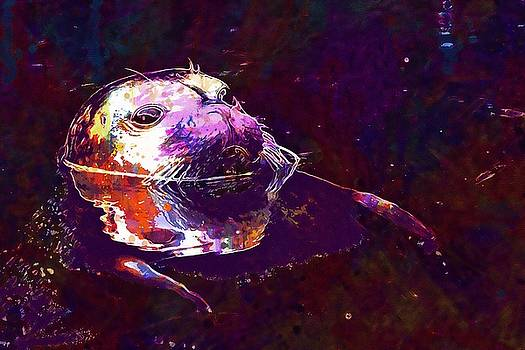 Seal Water Robbe Swim Animal World  by PixBreak Art